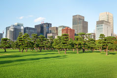 Parc de pins devant des gratte-ciel Photographie stock