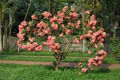 Parc de Ramna au coeur de Dacca Images stock