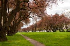 Parc de Remich Photos libres de droits