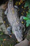 parc de reptiles Images stock