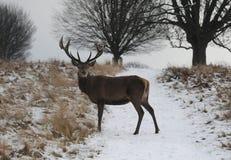 Parc de Richmond dans la neige photos libres de droits