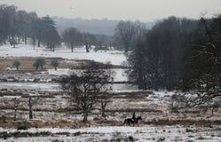 Parc de Richmond dans la neige images libres de droits