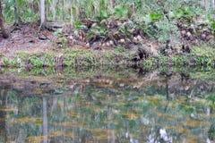 Parc de rivière de Hillsborough Photos libres de droits