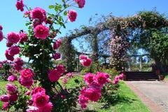 Parc de roses Image stock