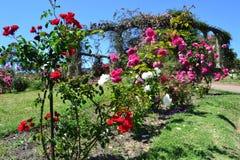 Parc de roses Photographie stock libre de droits