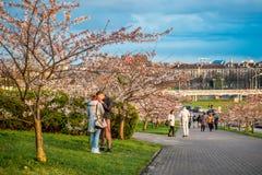 Parc de Sakura à Vilnius Images libres de droits