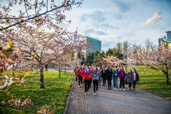 Parc de Sakura et foule des personnes, Vilnius Images libres de droits