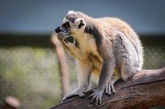 Parc de Serengeti en Allemagne photos libres de droits