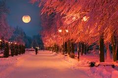 Parc de soirée après des chutes de neige Photos stock