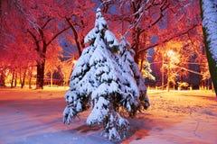 Parc de soirée après des chutes de neige Images stock