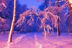 Parc de soirée après des chutes de neige Photo libre de droits