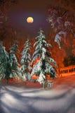 Parc de soirée après des chutes de neige Photos libres de droits