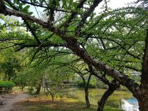 Parc de Thanommitr Images libres de droits