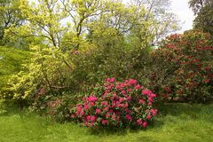 Parc de Tilgate, le Sussex occidental, Angleterre photo libre de droits
