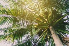 Parc de vert de bokeh de nature de tache floue par la plage images libres de droits