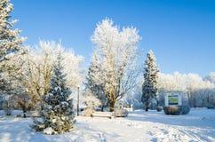 Parc de ville avec des arbres couverts de gelée Images stock