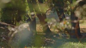 Parc de ville d'Autumn Landscape With People In banque de vidéos