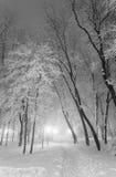 Parc de ville d'hiver dans le matin Photographie stock
