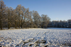 Parc de ville en hiver Photographie stock libre de droits