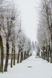 Parc de ville pendant l'hiver, arbres couverts de gelée images stock