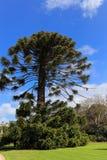 Parc de Werribee à Melbourne, Australie Image libre de droits