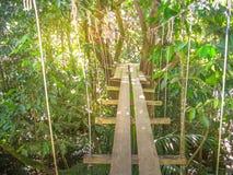 Parc Des Mamelles Guadeloupe Fotografia Royalty Free
