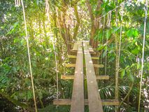 Parc Des Mamelles Guadeloupe. Suspended bridges at top of the trees in Parc Des Mamelles, Guadeloupe Zoo, in the middle of the rainforest on Chemin de la Royalty Free Stock Photography