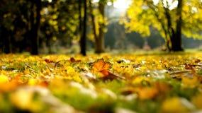 Parc do outono com fundo obscuro Imagem de Stock Royalty Free