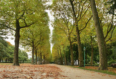 "Parc du Cinquantenaire †""Jubelpark bryska _ Royaltyfri Bild"