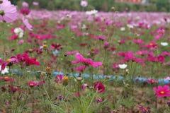 Parc du monde de Huamu photographie stock libre de droits
