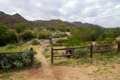 Parc du sud de montagne, Phoenix, Arizona photo stock
