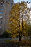 Parc en automne images stock