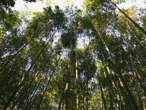 Parc en bambou Photographie stock libre de droits