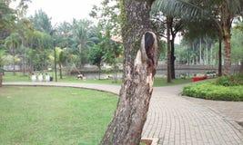 Parc en bois Photo libre de droits