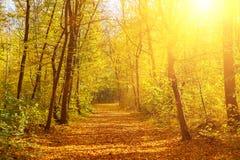 Parc ensoleillé d'automne photos stock