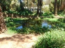 Parc exotique photo libre de droits