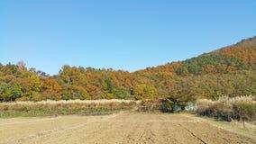 Parc floral dans le jour ensoleillé d'automne Images libres de droits