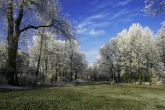 Parc givré Image libre de droits