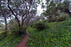 Parc Guell trädgård Royaltyfri Bild