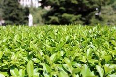 Parc, herbe et arbres sauvages, nature Photographie stock libre de droits