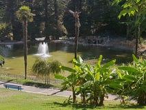 Parc i sommaren Arkivbilder