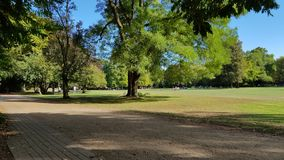 Parc idyll. Green nature trees royalty free stock photography