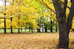 Parc jaune Image libre de droits