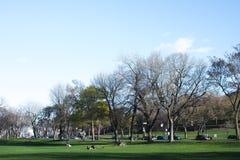 Parc Jeanne Mance Στοκ εικόνες με δικαίωμα ελεύθερης χρήσης