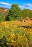 Parc le Colorado du comté de réservoir de Horsetooth Photo libre de droits