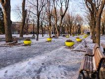 Parc los angeles Fontaine - aleja drzewa zdjęcie stock