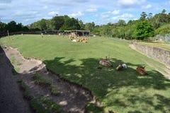 Parc Montevideo de Lecoq Image stock