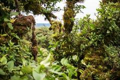Parc national Costa Rica de Monteverde Photos libres de droits