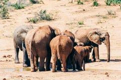 Parc national d'éléphant d'Addo, le Cap-Oriental, Afrique du Sud Photo stock