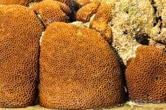 Parc national d'îles de Similan Photographie stock libre de droits